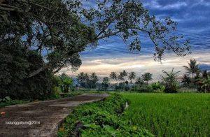 Desa Wisata Tingkir Lor