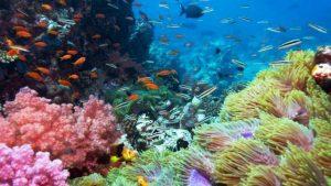 Dunia Bawah Laut