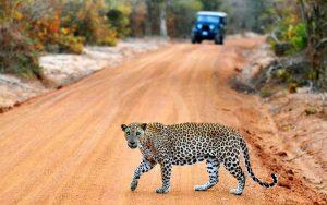 Yala-National-park-Sri-Lanka-6
