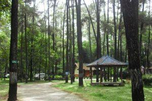 hutan-punti-kayu