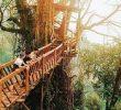 15 Tempat Wisata yang tidak Jauh dari Jakarta Paling Seru