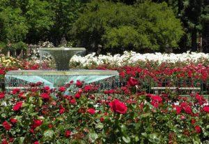 Taman Mawar