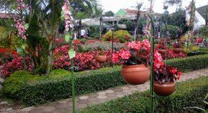 Taman Bunga Begonia