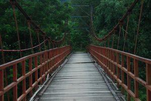 Keunikan Hutan Tinjomoyo