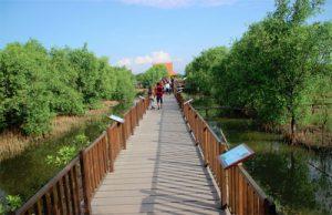 Keindahan Mangrove Wonorejo