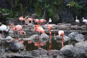 Pembagian Zona Batu Secret Zoo