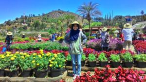 Petik Sayur dan Buah di Taman Bunga Begonia