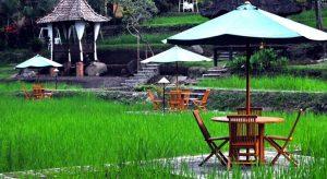 Paddy City Resort