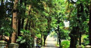 Wahana Hutan Pengaron