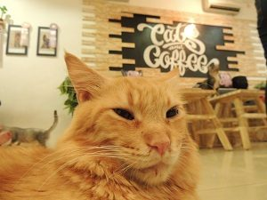 cats and coffe