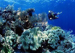 Taman-Laut-Wakatobi