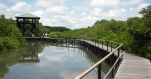 Lokasi Mangrove Edupark