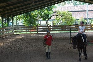 trijaya equestrian