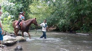 bale kuda stable
