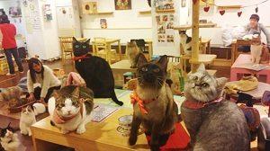 Cats-Playground-Cats-Myeongdong