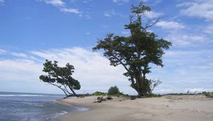 Pantai Teluk Sepang