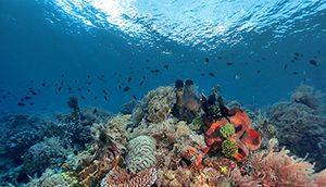 Bunaken Timor