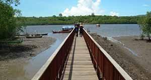 Mangrove Bedul Ecotourism