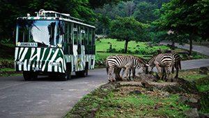 Taman Safari Indonesia Prigen