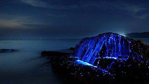 Awaji Island Sea Firefly