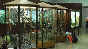 Kebun Raya Bogor dan Museum Zoologi