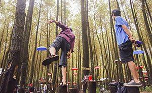 Hutan Pinus Semeru