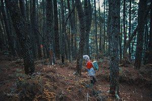 Hutan Pinus Baredok