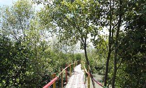 Wisata Hutan Mangrove Sriminosari