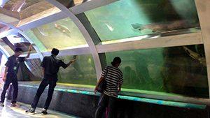 Aquarium Taman Pintar Yogyakarta
