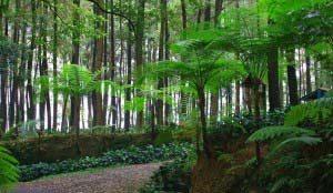 Taman Hutan Raya (Tahura)
