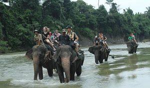Tangkahan Eco Tourism