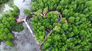 Hutan Mangrove Langge