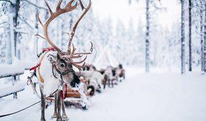 Santa Claus Reindeer Ky
