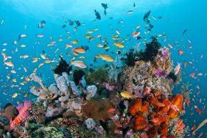 Diving Atau Snorkeling