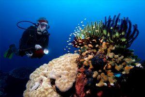 Aktivitas Wisata Di Pulau Misool