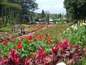 Kebun Bunga Cihideung