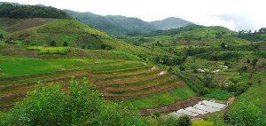 Pertanian Nan Pu Tiger