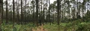 Taman Hutan Jayagiri
