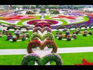 miracle garden..