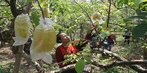 Agro Belimbing Ngringinrejo