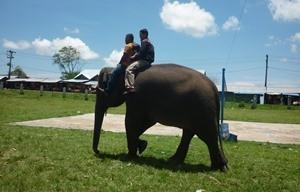 Pelatihan Gajah Sare