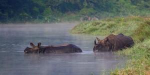 Taman Nasional Chitwan