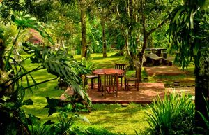 Tlogo Plantation