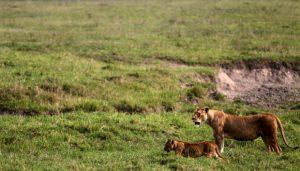 Area Konservasi Ngorongoro