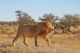 Cagar Alam Kalahari