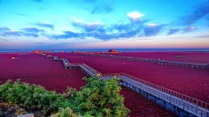 Pantai Merah Panjin (China)