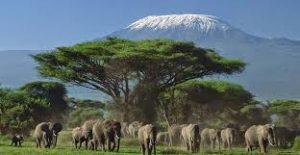 Taman Nasional Amboseli