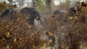 Taman Nasional Chobe