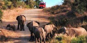 Taman Nasional Kruger