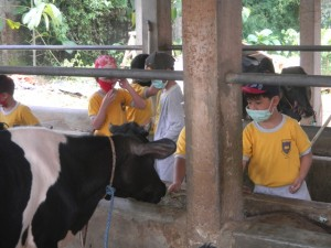 Cibubur-Garden-Dairy